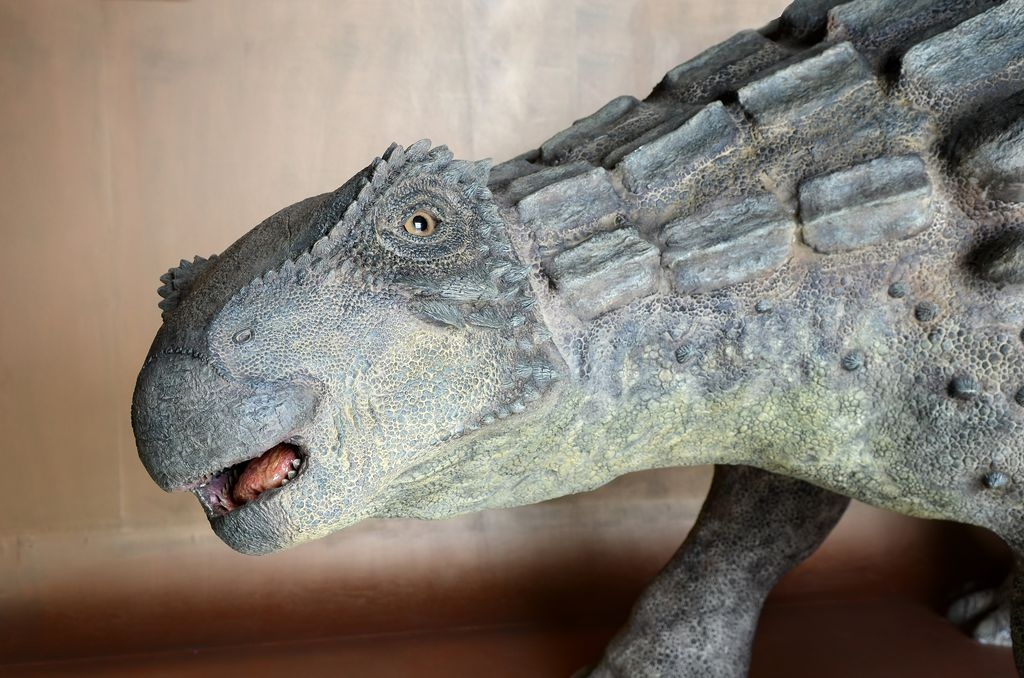 Fósiles originales y réplicas